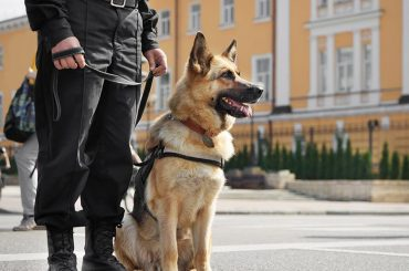 Security, Dog, Handling, Secure, Protect