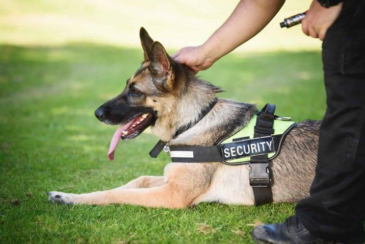 security dog handling