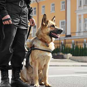 Manchester Security Dogs